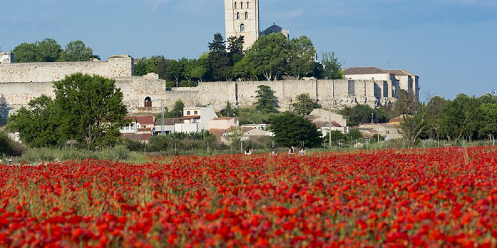 Zamora, visitas guiadas bajo las medidas de seguridad